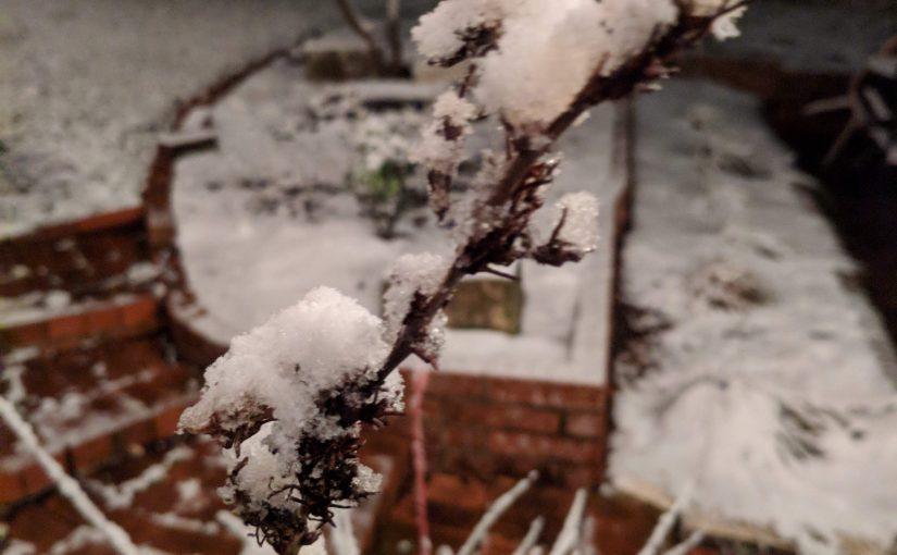 Snow in Austin!